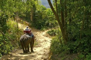 Trip-on-elephants-on-jungle-300x200